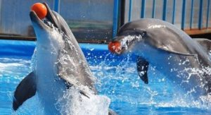 Два дельфина в воде