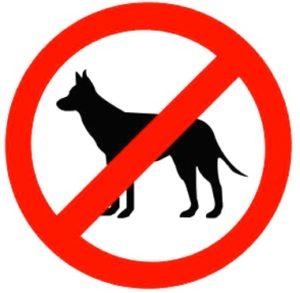 Собак не дарить!