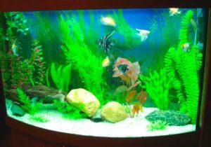 Аквариум с искуственными рыбками и водорослями