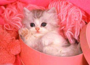 Маленький котенок для девочки в подарок