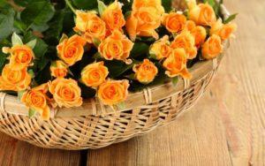 Оранжевые розы в корзинке