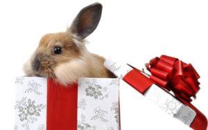 Кролик декоративный в коробке с бантом