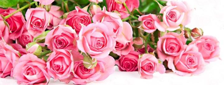 Розы лиловой гаммы
