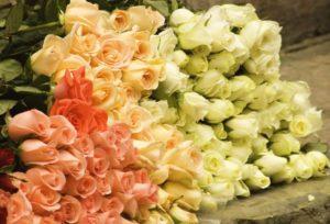 Розы перед сбором в букет