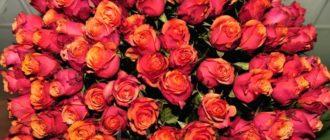 Огромный букет роз - желанный подарок любой девушки