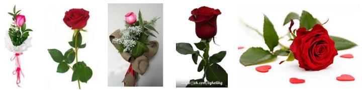 Букет из одной розы