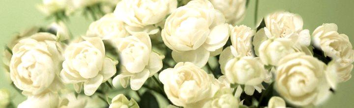 Море из белых роз