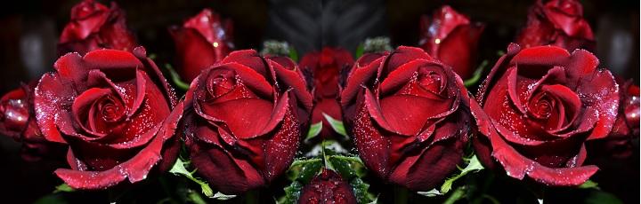 Цвет бордо в розах