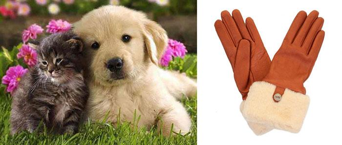 Котенок, щенок и перчатки