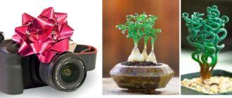 Камера в подарок или экзотическое растение