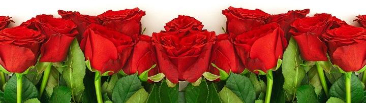 Красные розы как символ страсти