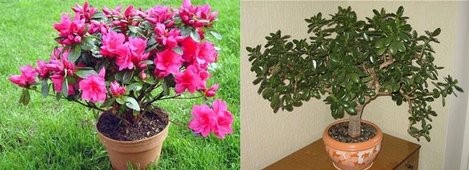 Цветок в горшке и днежное деревце