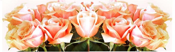 Розы персикового цвета