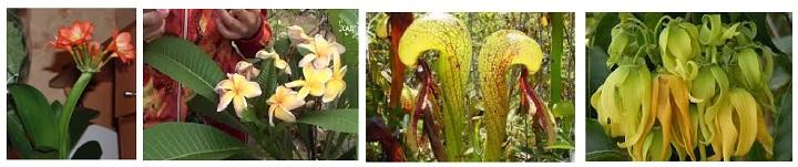 Редкое комнатное растение