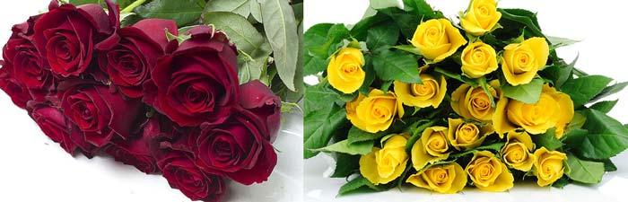 Бордовые и желтые розы