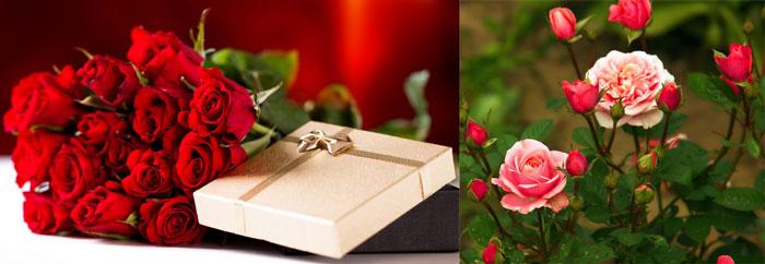 Розы и подарок