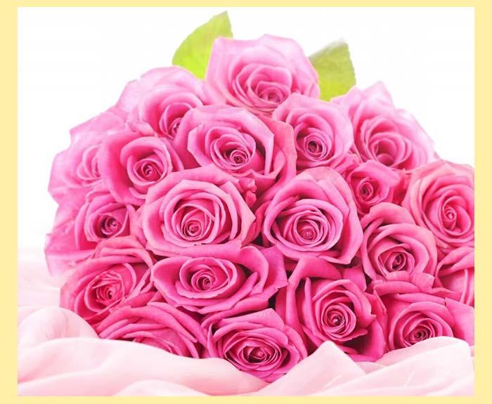 Розовые розы более 11шт