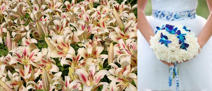 Кремовые лилии и букет невесты