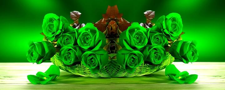 Новинка сезона - зеленые розы