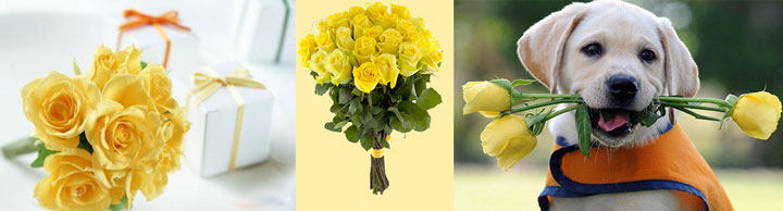 Букеты желтых роз для подарка