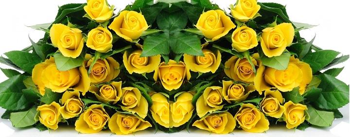 Желтые розы - символ дружбы