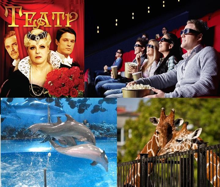 Кино театр дельфинарий зоо