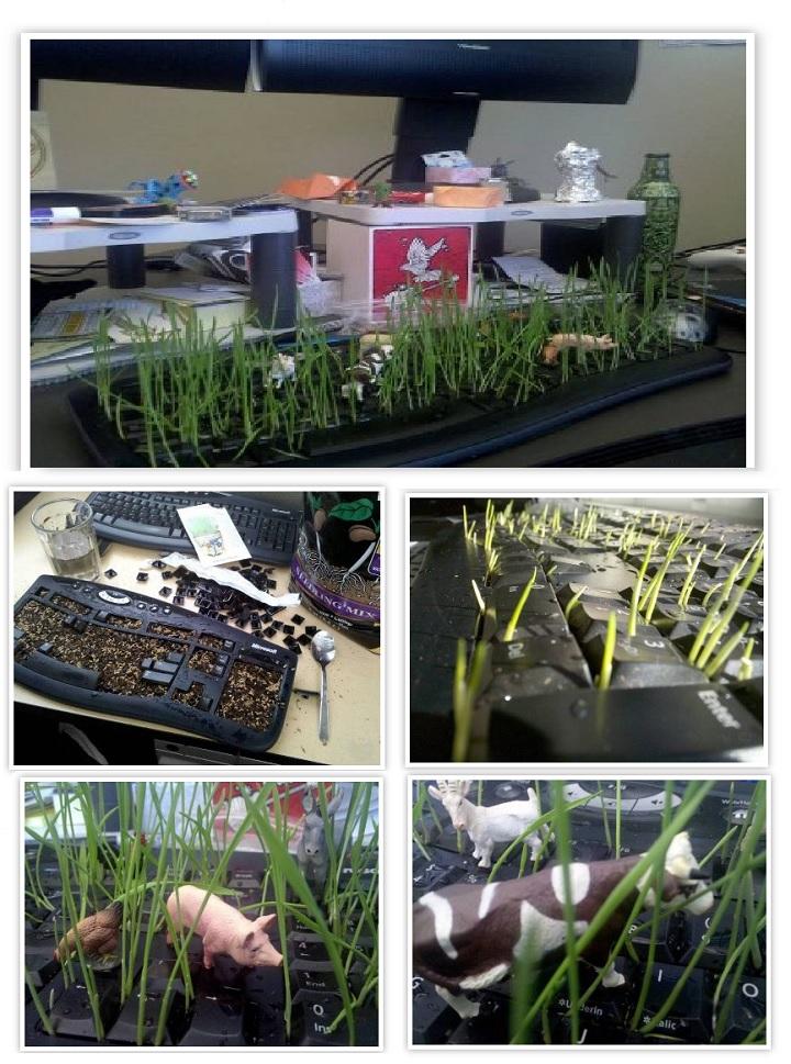 Посев травы в клавиатуре. Сюрприз