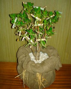 Живое денежное дерево, украшенное денежными купюрами