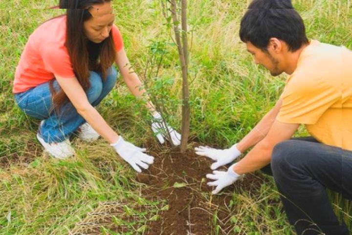 Пара садит дерево