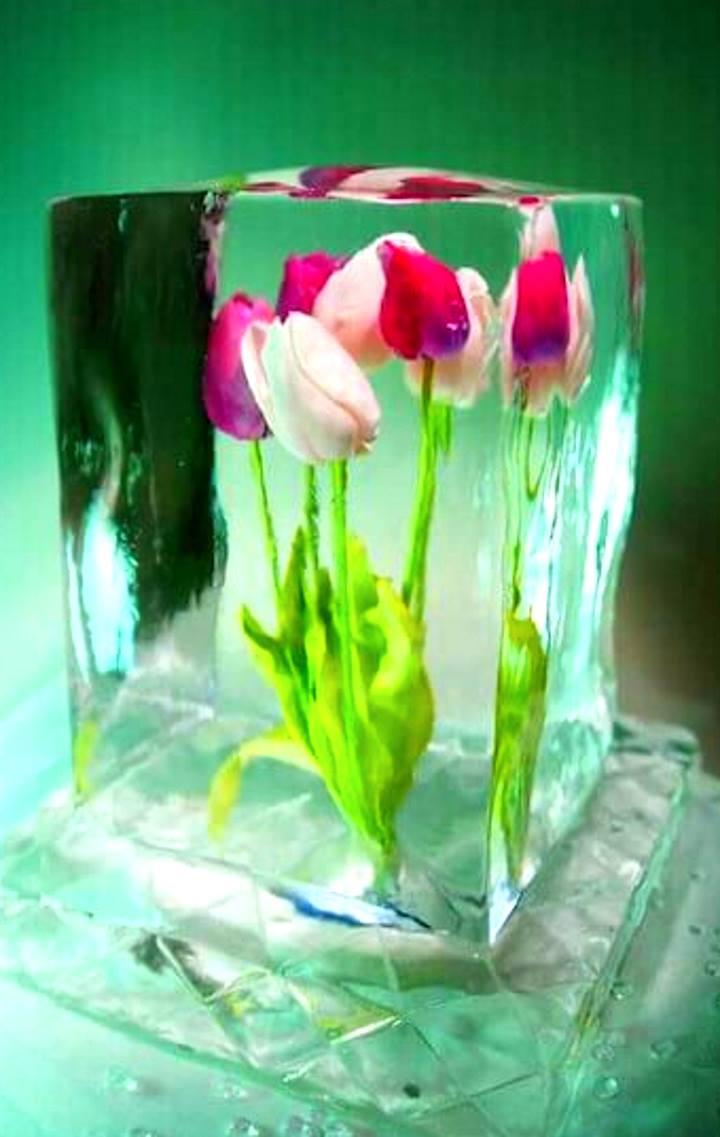 Тюльпаны в куске льда