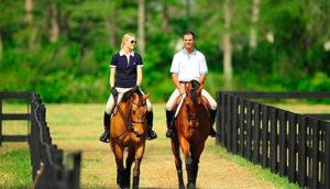 Уроки катания на лошадях