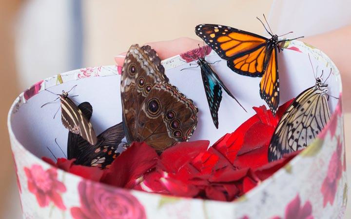 Бабочки в подарок