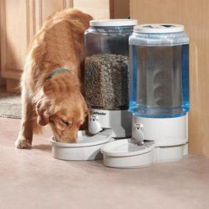Пес пьет из автопоилки