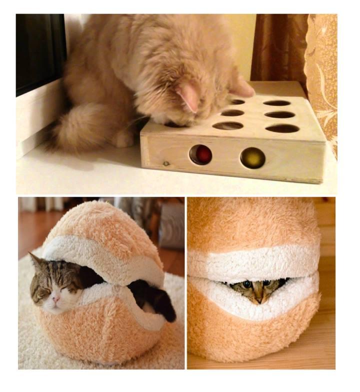Домашние предметы для котика