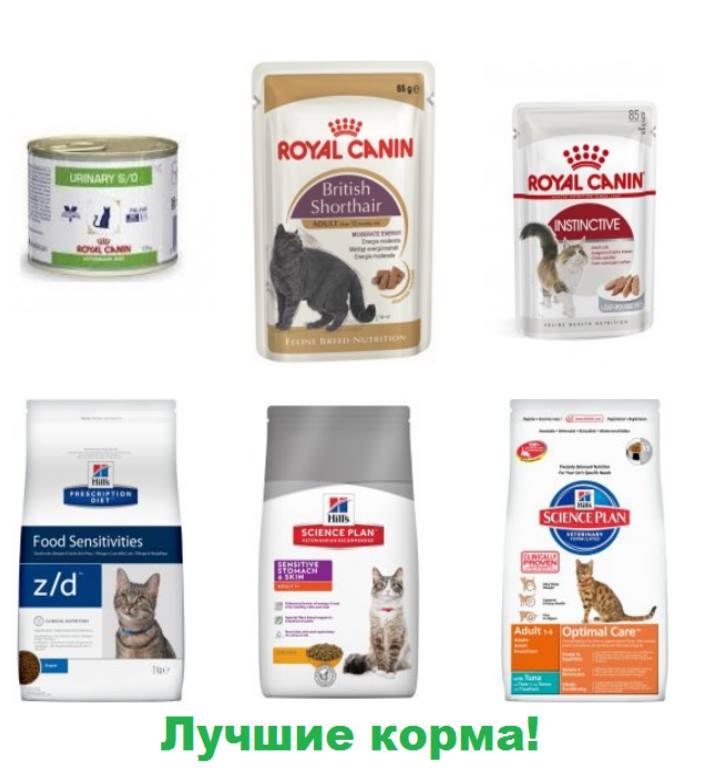 Желательные корма для котов