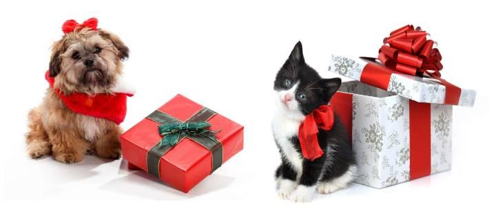 Подарочные животные