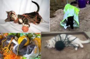 Плохие игрушки для котов
