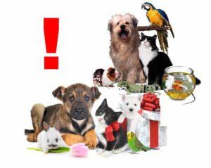 Животные в подарок