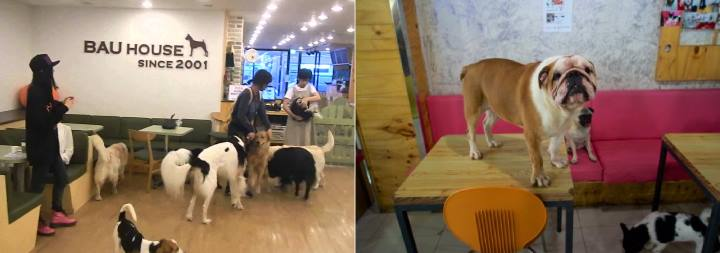 Разные собаки в своем кафе