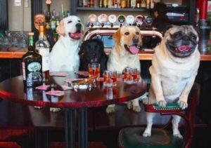 Вечеринка у пса
