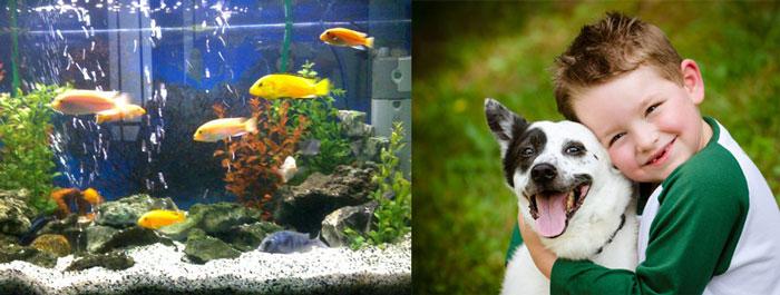 Рыбки в аквариуме и мальчик с собакой