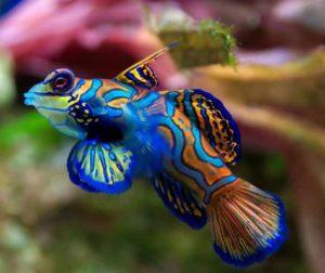 Редкая рыбка