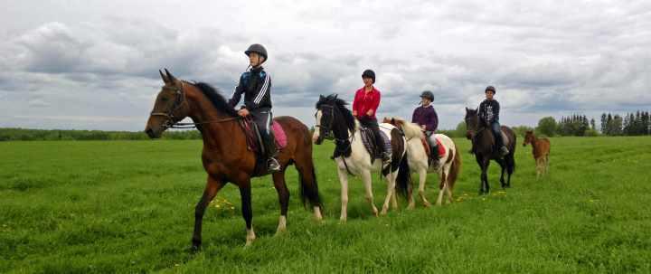 Группа на лошадях