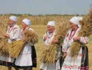 Украшение пшеницей на праздник