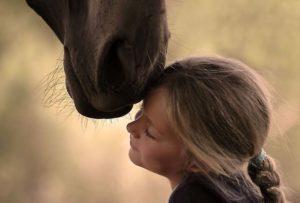 Нежность лошади