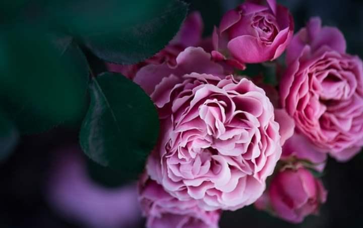 Розы для женщины 60+