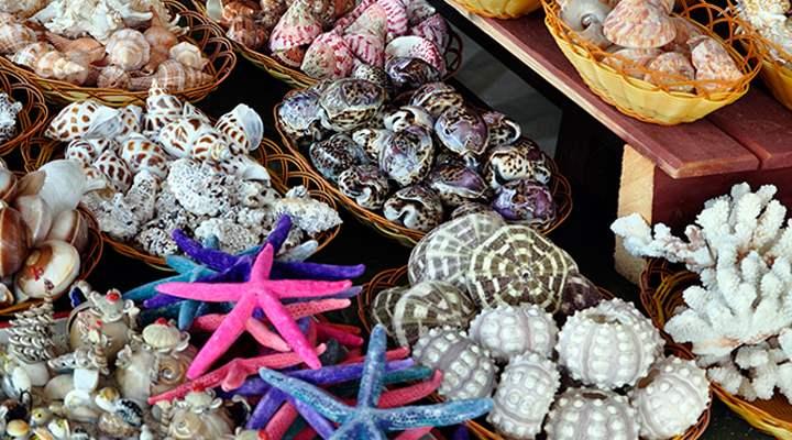 Морской сувенир из Анапы