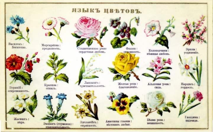 Значения разных цветов